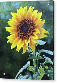 Sunflower Acrylic Print by Janet King