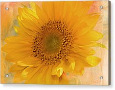Sunflower Kisses Acrylic Print