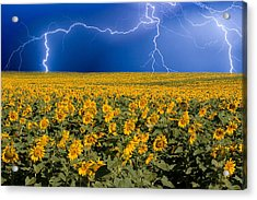 Sunflower Lightning Field  Acrylic Print by James BO  Insogna