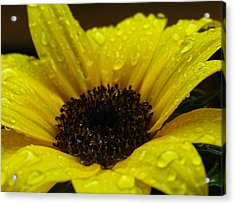 Sunflower Macro Acrylic Print by Juergen Roth