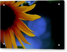 Sunflower Acrylic Print by Martin Morehead