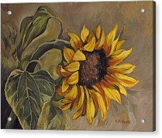 Sunflower Nod Acrylic Print by Cheryl Pass
