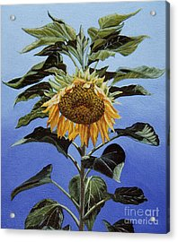 Sunflower Nodding Acrylic Print by Jiji Lee