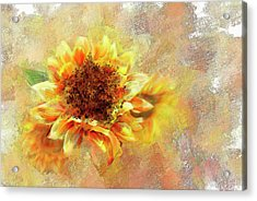 Sunflower On Fire Acrylic Print