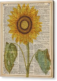Sunflower Over Dictionary Page Acrylic Print