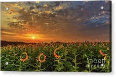 Sunflower Peak Acrylic Print