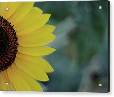 Sunflower Peeking.. Acrylic Print