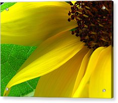 Sunflower Petals Acrylic Print by Juergen Roth