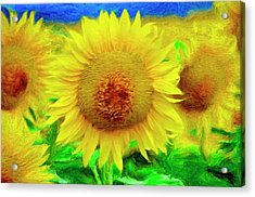 Sunflower Posing Acrylic Print by Jeffrey Kolker