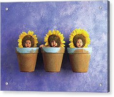 Sunflower Pots Acrylic Print by Anne Geddes