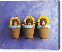 Sunflower Pots Acrylic Print