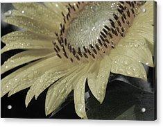 Sunflower Rain Acrylic Print by Carolyn Stagger Cokley