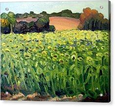 Sunflower Sea Acrylic Print