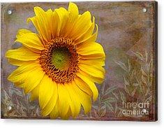 Sunflower Serenade Acrylic Print by Nina Silver