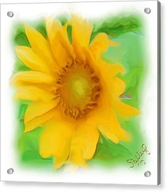 Acrylic Print featuring the painting Sunflower by Shelley Bain