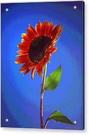 Acrylic Print featuring the photograph sunflower Solitaire by Joyce Dickens