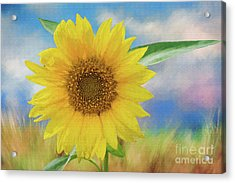 Sunflower Surprise Acrylic Print by Bonnie Barry