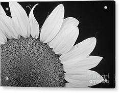 Sunflower Three Quarter Acrylic Print