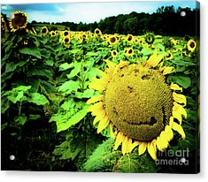 Sunflower With A Smiley Face Acrylic Print