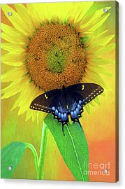 Sunflower With Company Acrylic Print