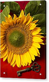 Sunflower With Old Key Acrylic Print by Garry Gay
