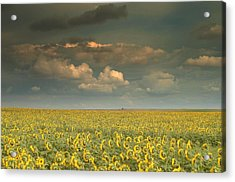 Sunflower World.. Acrylic Print