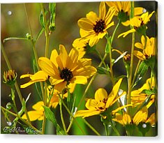 Sunflowers Along The Trail Acrylic Print by Barbara Bowen