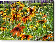 Sunflowers And Friends Acrylic Print by Jean Booth