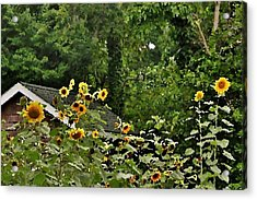 Sunflowers At The Good Earth Market Acrylic Print