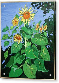Sunflowers Acrylic Print by John Gibbs