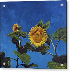 Sunflowers Acrylic Print by Marco Busoni