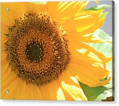 Acrylic Print featuring the photograph Sunflowers  by Marna Edwards Flavell