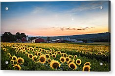 Sunflowers, Moon And Stars Acrylic Print by Eduard Moldoveanu