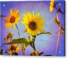 Acrylic Print featuring the photograph Sunflowers - The Arrival by Glenn McCarthy Art and Photography