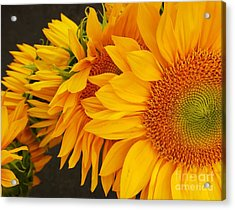 Sunflowers Train Acrylic Print