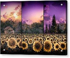 Sunflowers Triptych 2 Acrylic Print