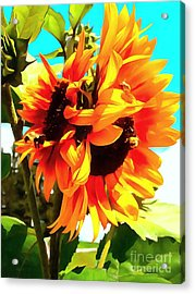 Acrylic Print featuring the photograph Sunflowers - Twice As Nice by Janine Riley