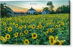 Sunflowers For Wishes  Acrylic Print