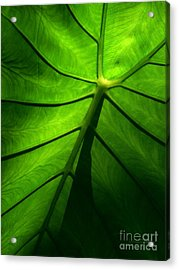 Sunglow Green Leaf Acrylic Print by Patricia L Davidson