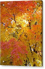 Acrylic Print featuring the photograph Sunkissed 2 by Elizabeth Sullivan