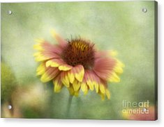 Sunkissed Acrylic Print by Cindy McDonald