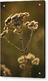 Acrylic Print featuring the photograph Sunkissed by Lori Mellen-Pagliaro