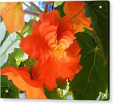 Sunkissed Orange Begonias Acrylic Print