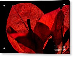 Sunlight Behind The Petals Acrylic Print by Kaye Menner