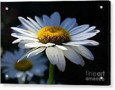 Sunlight Flower Acrylic Print by John S