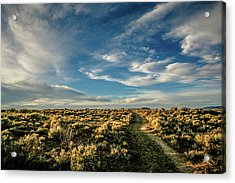 Acrylic Print featuring the photograph Sunlight For Photographers by Marilyn Hunt