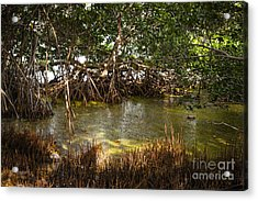 Sunlight In Mangrove Forest Acrylic Print by Elena Elisseeva