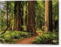 Acrylic Print featuring the photograph Sunlight In The Redwoods by James Eddy