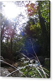 Sunlight On Forest Ground Acrylic Print by Alison Heckard