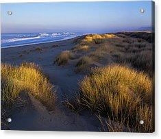 Sunlight On The Beach Grass Acrylic Print